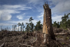 A peatland forest clearing for a palm oil plantation in the Leuser ecosystem, South Aceh, Indonesia