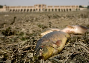 Dead fish lay on the dried Zayandeh Rud river in Isfahan.