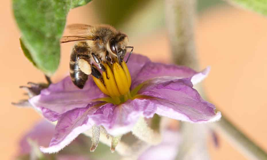 Catch the buzz… a bee gets busy pollinating, grab your toothbrush, you can help.
