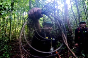 Forest rangers show a tiger trap set by poachers in the Leuser ecosystem near Aceh, Indonesia