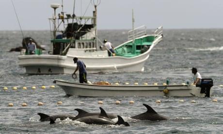 Japanese man prepares for landmark case against dolphin hunts