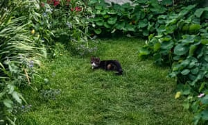Purr-fect position: Pearl the cat in Kala's garden.