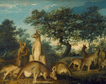 Lewin was an artist trained in anatomy, but kangaroos would have been new to him.
