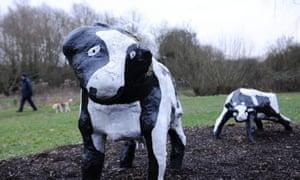 A dog walker passes The Concrete Cows sculpture