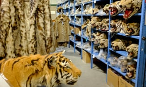 Contraband sits on shelves inside the National Wildlife Property Repository in Commerce City, Colorado, U.S., on Wednesday, May 31, 2017. Photographer: Matthew Staver
