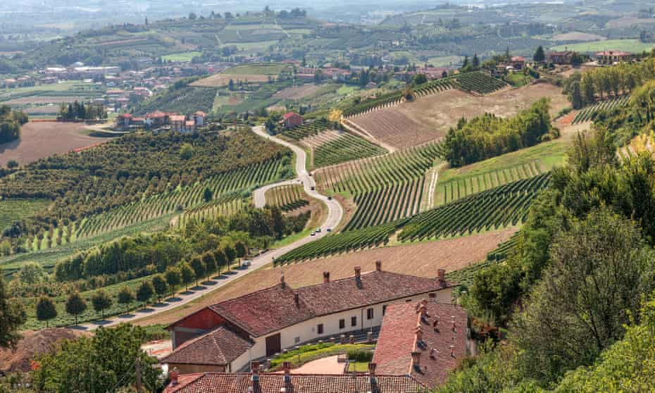 View of rural houses, green vineyards and road