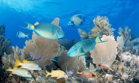 A coral reef in Key Largo, Florida. Scientists from the US and Cuba will cooperate on how best to preserve their ecosystems amid oil exploration and tourism.