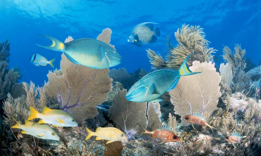 Florida's reef is home to 100 coral species and more than 400 fish species.