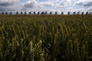 Cyclists ride among wheatfields during the third stage of the Tour de France