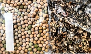 Bags of hope: neatly sorted and stored, these seeds are ready for a spring planting.