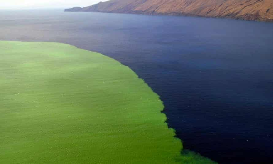 Lava and gases from an underwater volcanic eruption in the Canary Islands, turning waters green.