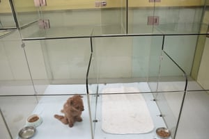 A dog sits in a glass kennel awaiting treatment