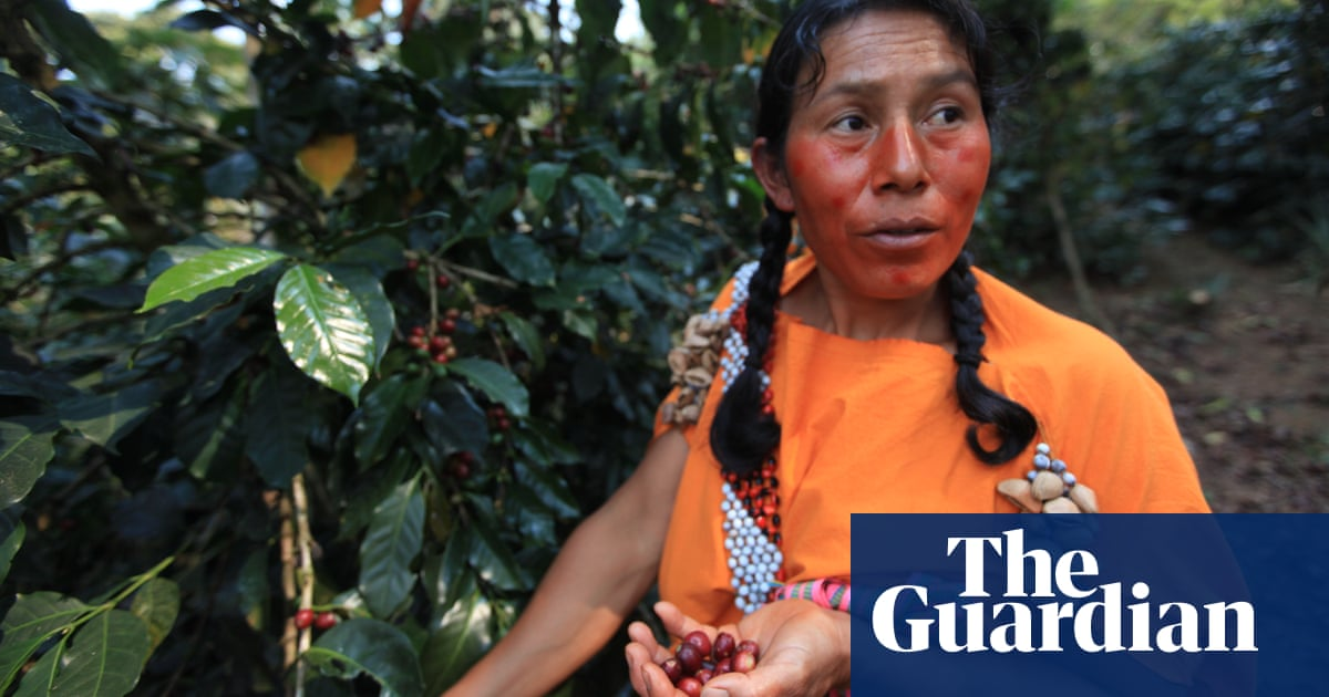 Special brew: eco-friendly Peruvian coffee leaves others in the shade