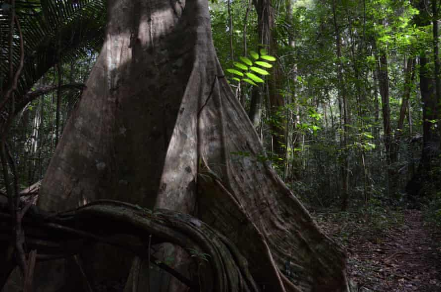 Remote forest in French Guiana.