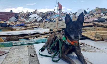 Mika, a search and rescue dog, takes a rest in the Abaco Island shantytown of Pigeon Peas, which was demolished in the wake of Hurricane Dorian, in Marsh Harbour, Bahamas on Sunday.