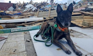 A search and rescue dog takes a rest among the devastation in Marsh Harbour.