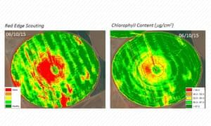 Sensilize's pigment analysis
