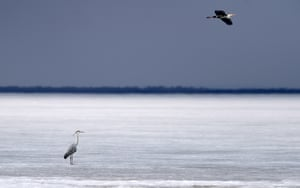 Herons rest on the remaining ice on Xingkai Lake, a border lake between China and Russia, in northeast China's Heilongjiang Province