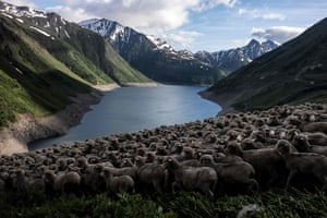 Sheep graze in a field overlooking the Lac de Grand Maison