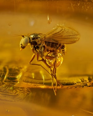 Honourable mention: an amber series project displays tiny insects no more than 3mm long that have been encapsulated within hardened tree sap for 45 million years