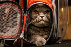 Thunder Folds Cat arrives before the Algonquin hotel's annual cat fashion show in New York, US