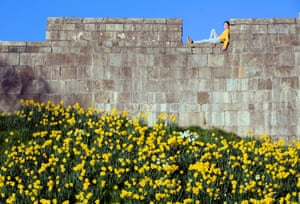 A girl looks down from the ancient city walls onto blooming daffodils as spring begins, York, England