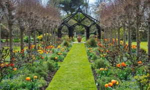 'Brown Sugar' and 'Apeldoorn' tulips beneath lime trees at Rymans.