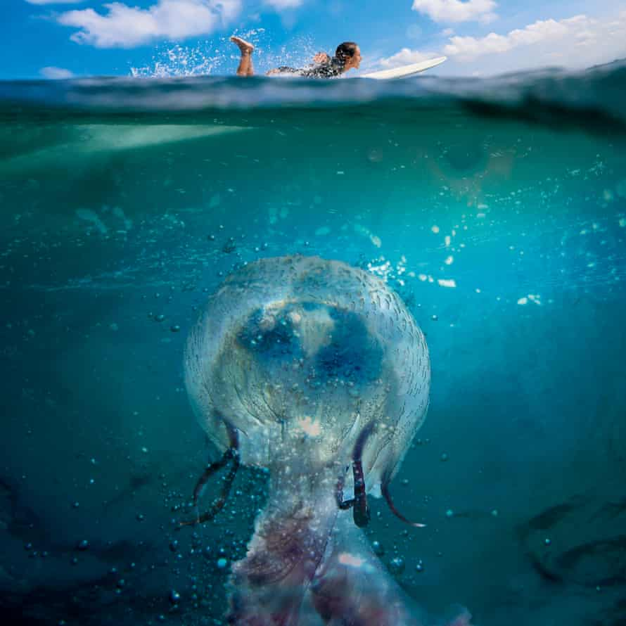 Composite of woman surfing with a giant jellyfish in the water beneath her