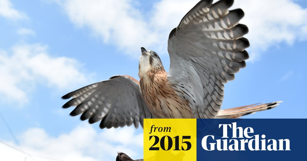 Bird lovers fear annual Australian back yard count will detail