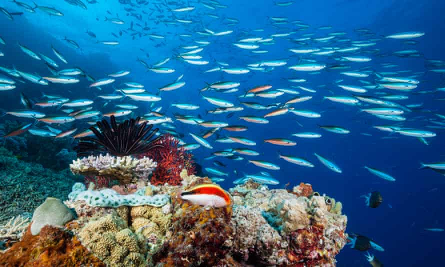 File photo of the Great Barrier Reef, Australia