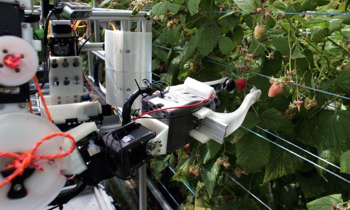 Robocrop: world's first raspberry-picking robot set to work