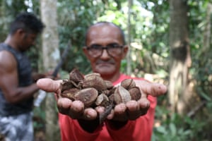 A member of the Rio Nose community with a handful of Brazil nuts, which will be sold and reprocessed as oil.
