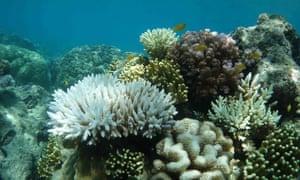 Heat-stressed corals off Lizard Island in February 2020