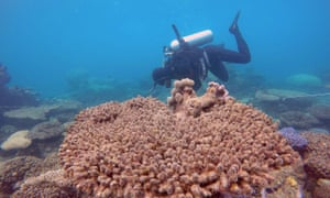A scientist assesses coral on the Great Barrier Reef