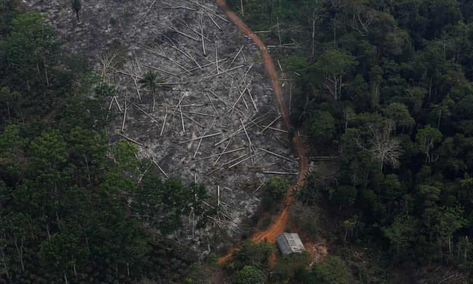 Aerial view of logged forest