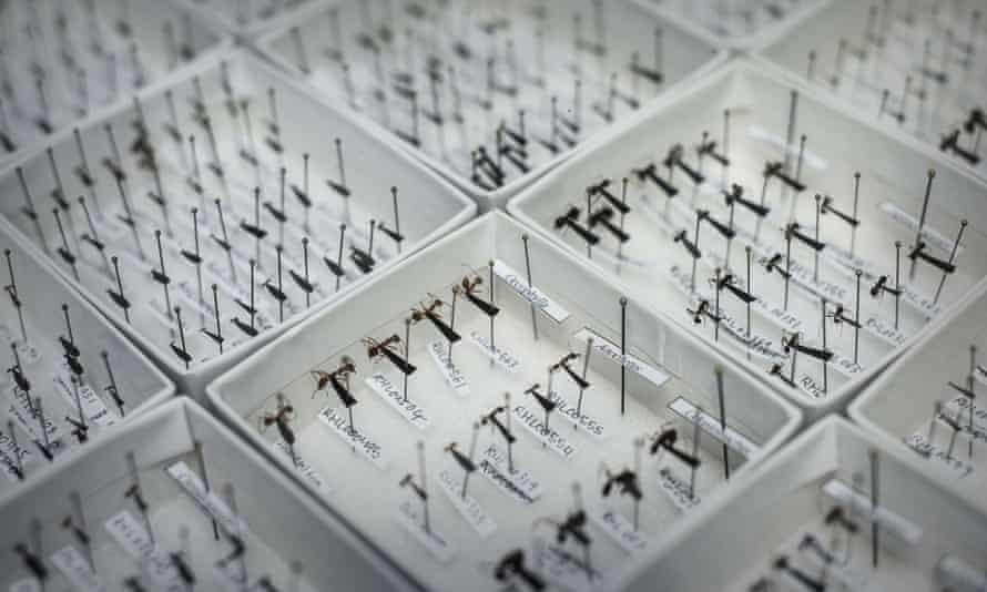 Ant species displayed at Hong Kong University.