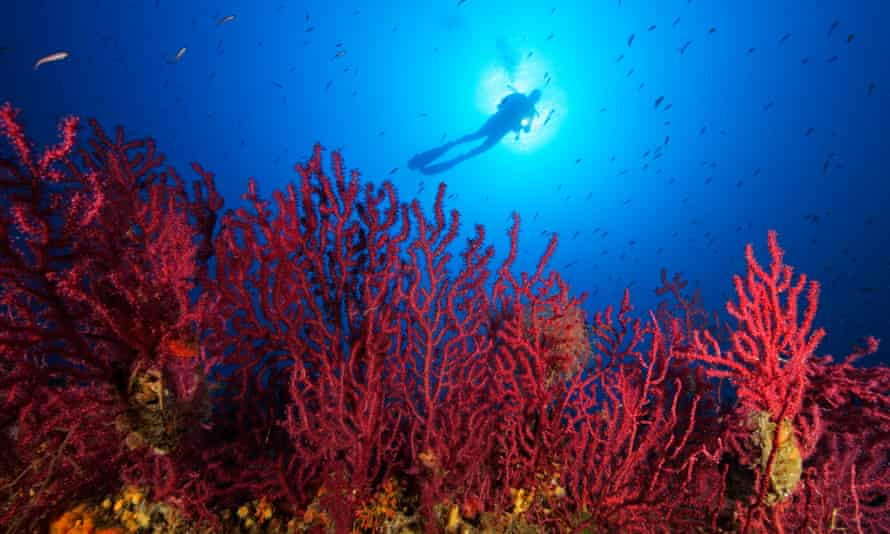 A strong El Niño is set to worsen the plight of coral in 2016.