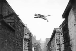 Cat jumping, Salford, 1957