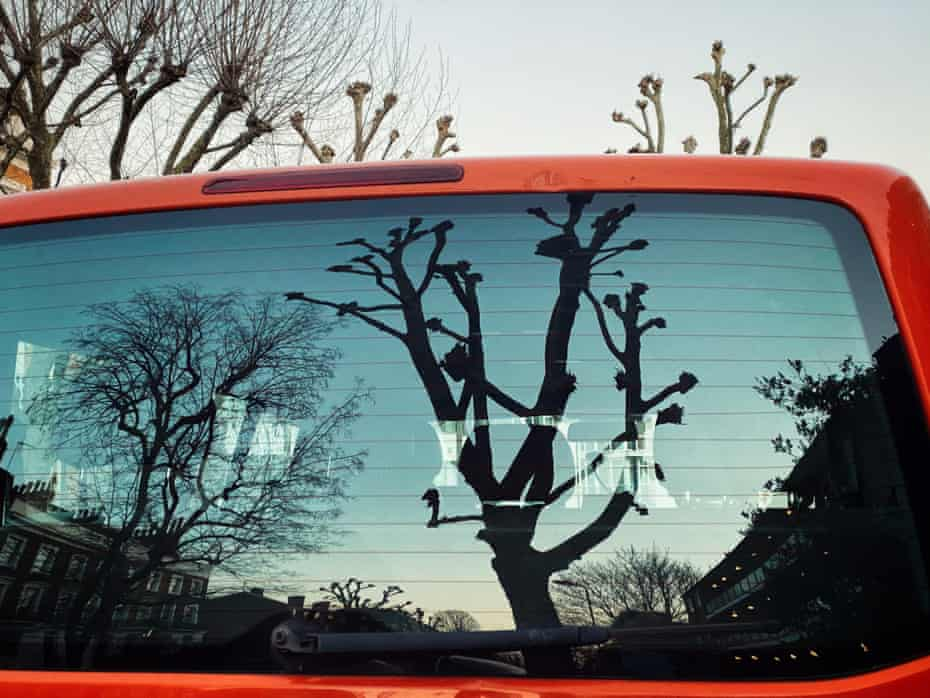 Skyline and bare trees at dusk reflected in the back window of a car.