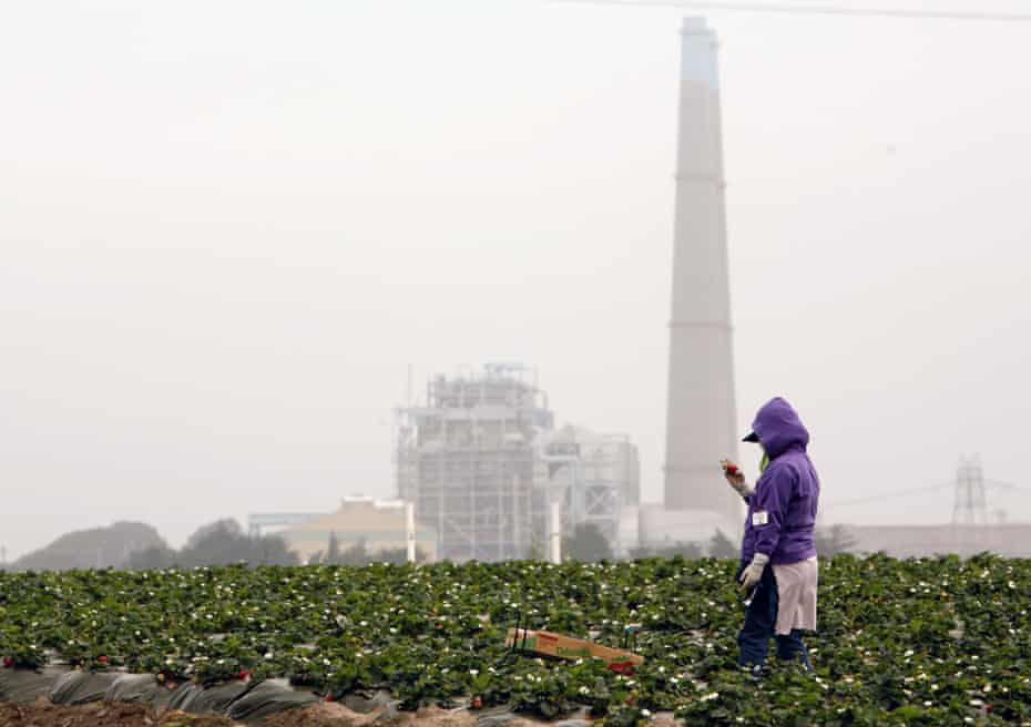 A farmworker inspects a strawberry under gray skies in a field near Moss Landing, California.