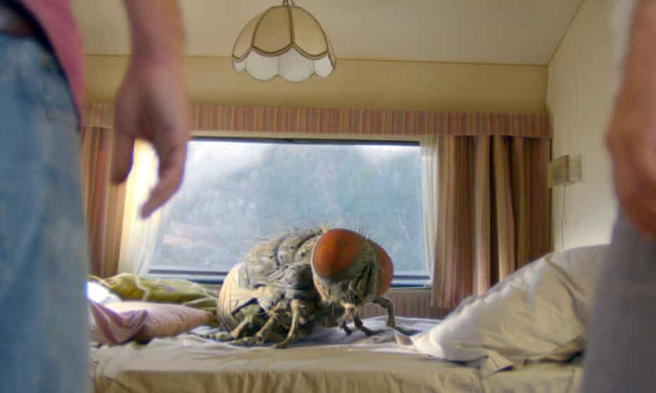 Dominique, the giant housefly in Mandibles, a French-Belgian comedy film written and directed by Quentin Dupieux.
