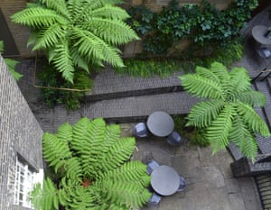 A shady garden with ferns at the Royal Academy in London designed by Tom Stuart-Smith.