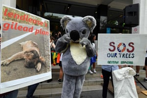 A student in a koala suit stands between placards during a rally calling for action on climate change in front of the Liberal Party headquarters in Sydney.