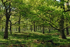 The ancient Woodland of Gwenffrwd-Dinas RSPB reserve