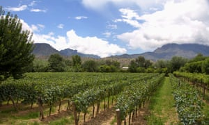 Vineyards in Bolivia: try good-quality wines from lesser-known countries to get more bang for your buck.
