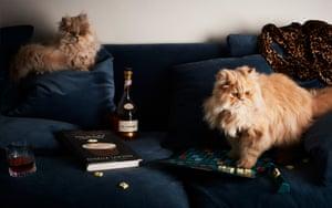 Cats, scrabble, domestic goddess