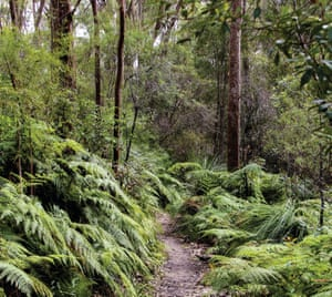 The Place of Winds interpretive trail in the (non-dog friendly) Berowra Valley national park.