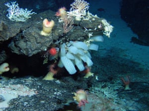 The vibrant anemones, sponges and octocorals that make up the diverse coral garden and sea-cliff community at the Atlantis bank, in the south-west Indian Ocean.