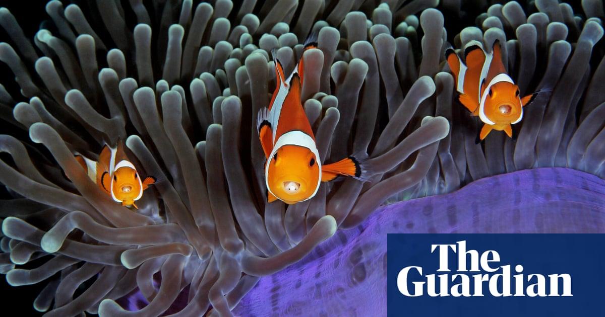 Underwater photographer of the year 2017 winners – in