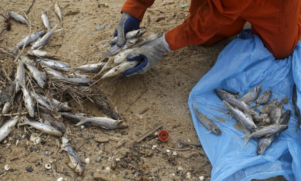 A fisherman clears up dead fish found after the disaster.